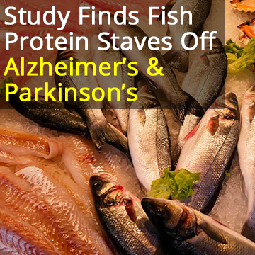 Abundant Fish Protein Inhibits Alpha-Synuclein Amyloid Formation, Could Prevent Parkinson's Disease