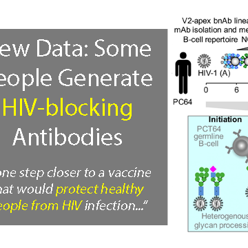 AIDS Vaccine Design: New Data Offers Important Insight