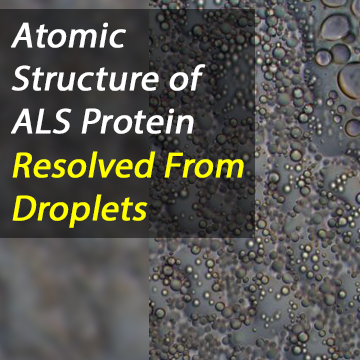 All in a Droplet: Atomic Resolution of ALS Protein Resolved