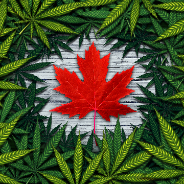 Aurora Cannabis Completes Acquisition of Anandia Laboratories
