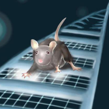 Autism Gene Makes Mouse Brains Less Flexible