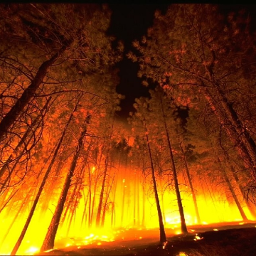 Californian Cannabis Industry Hit by Wildfires