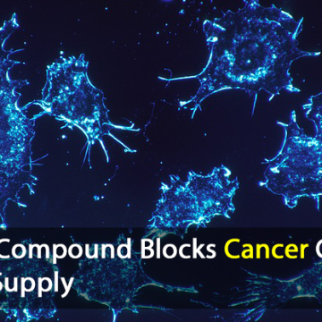 Cancer Cells' Energy Source Blocked by Natural Compound