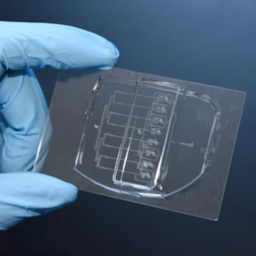 Cellular Guillotine Developed to Study Single-cell Wound Repair