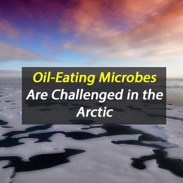 Could Oil-Degrading Microbes Protect the Arctic?