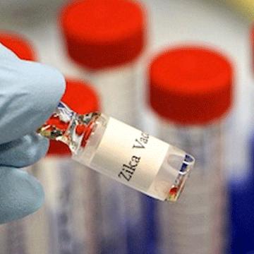 CRISPR Screen Identifies Gene That Helps Cells Resist West Nile, Zika Viruses