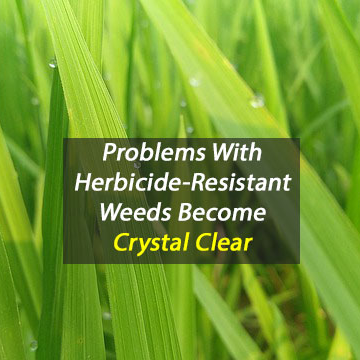 Crystallography Uncovers How Important Herbicide Works
