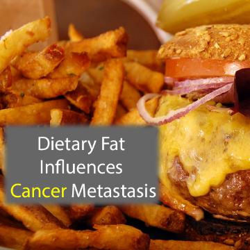 Dietary Fat Metabolism May Promote Metastasis