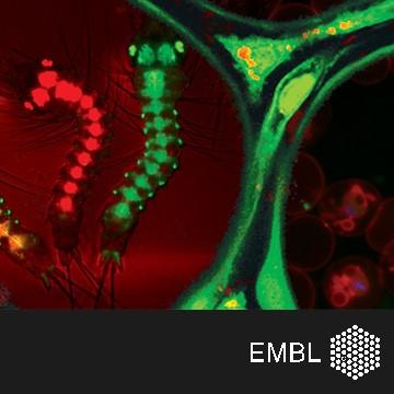 EMBL Conference: BioMalPar XIV: Biology and Pathology of the Malaria Parasite