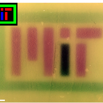 Engineered Bacteria Change Colour in Response to RGB Light