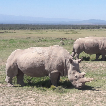 First Rhinoceros Embryos Generated in the Lab