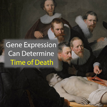 Gene Expression Patterns Can Determine Time of Death