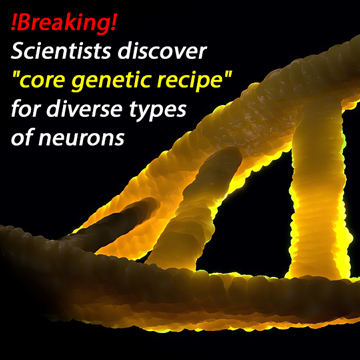 Genetic Code of Neuronal Communication Determines Cell Type