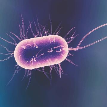Gut Bugs Advance Alzheimer's Disease
