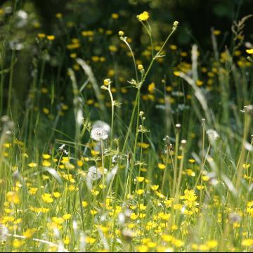 Hay Fever Risk Genes Overlap with Autoimmune Disease