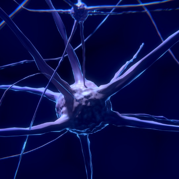 How THC Effects Your Brain's Neurotransmitters
