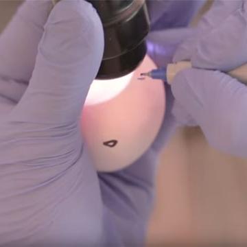 How to Grow Flu Inside an Egg