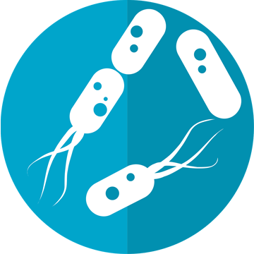 Human Gut Microbe May Herald New Treatment for Multiple Sclerosis