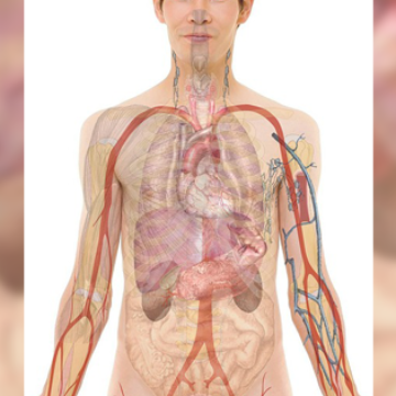 Human Microbiome Project: Millions of New Genes Identified