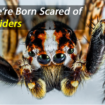 Innate Fear of Snakes and Spiders: a Survival Instinct Found in Babies