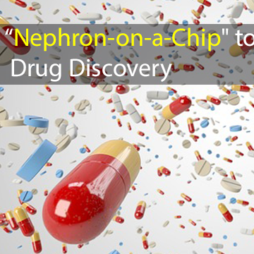 """Joining Forces to Develop """"Nephron-on-a-Chip"""" to Accelerate Drug Discovery in Kidney Disease"""