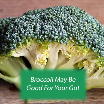 Like It or Not: Broccoli May Be Good for the Gut