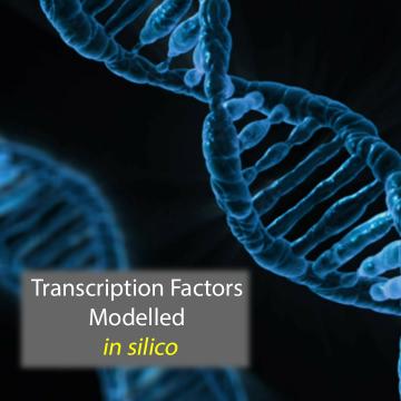 LogicTRN Model Illuminates Regulatory Gene Framework