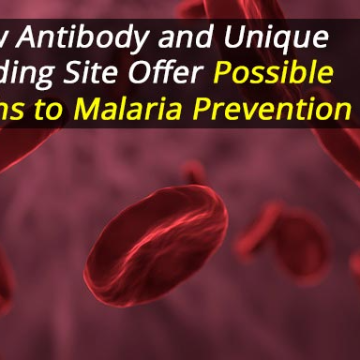 Malaria Prevention: New Antibody Targets Unique Binding Site