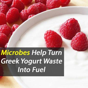 Microbes Help Turn Greek Yogurt Waste Into Fuel