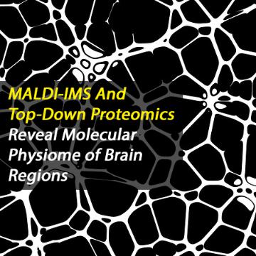 Molecular Physiome of Brain Regions Identified Using Top-Down Proteomics and MALDI Imaging Mass Spectrometry