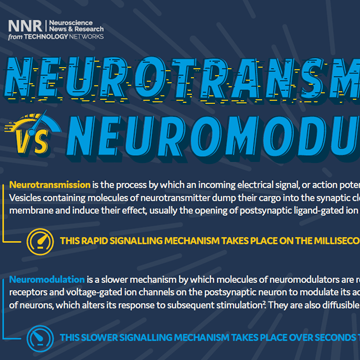 Neurotransmission Vs Neuromodulation