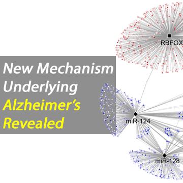 New Alzheimer's Mechanism Revealed