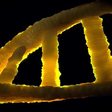 New Inherited Neurodevelopmental Disease Discovered