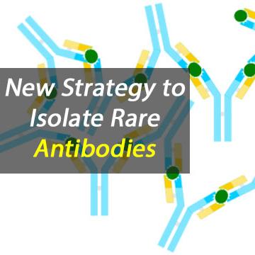 New Rare Antibody Isolation Strategy