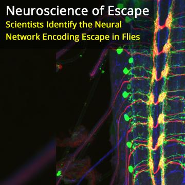 Nociceptive Interneurons Control Modular Motor Pathways to Promote Escape Behavior