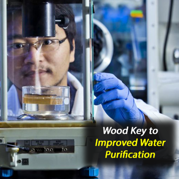 Pine and Poplar Wood Improve Sunlight-Driven Water Purification