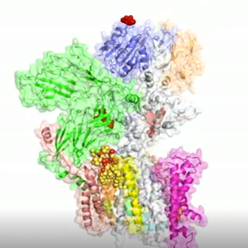 Potential Drug Target: Cryo-EM Uncovers Protein Modifying Complex