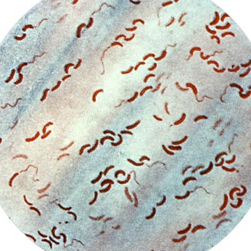 Recruiting Microbes to Combat Cholera Infection