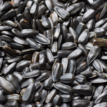 Sunflower Seeds Identified as Source of Potent Liver Carcinogen