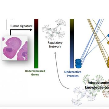 Targeting the Engine Room of the Cancer Cell