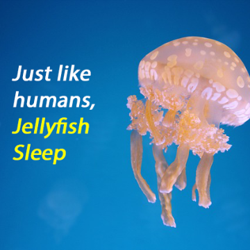 The Ancient Behaviour of Sleep, Conserved Throughout Evolution
