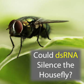 The BuzzBuster: Could Gene Silencing Help Silence the Housefly?