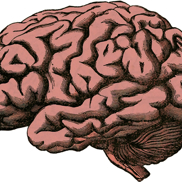 The NIH NeuroBioBank: Addressing the Urgent Need for Brain Donation