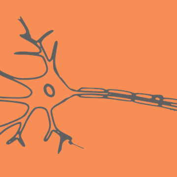 The Puzzle of Axonal Geometry May Have Been Solved, Could Influence Machine Learning