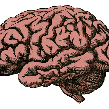 Therapeutic Potential of Vitamin B3 in Parkinson's Patients