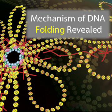 This Technique Makes DNA Go Loopy