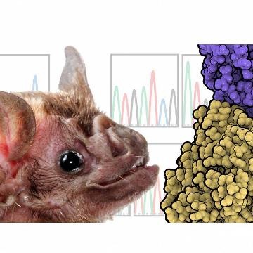 Viruses Spread their Net Through Adaptation