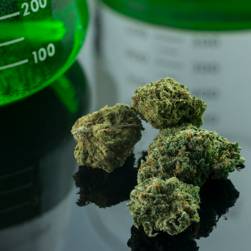 Where the Grass is Greener: Novel Solvents for the Environmentally Friendly Extraction of Phytocannabinoids