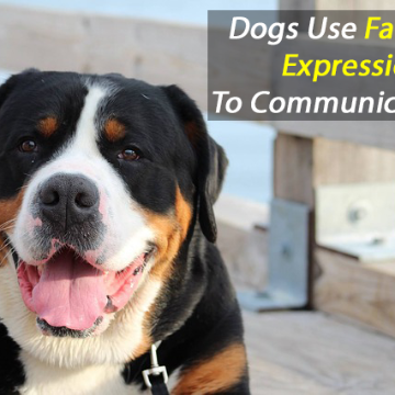 Your Dog May Be Using Facial Expressions to Communicate With You